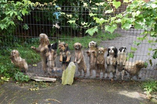Gyvūnų gerovės aktyvistai: tikėtina, kad šunys turės grįžti į daugyklas