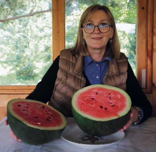 Ar saldūs lietuviški arbūzai?