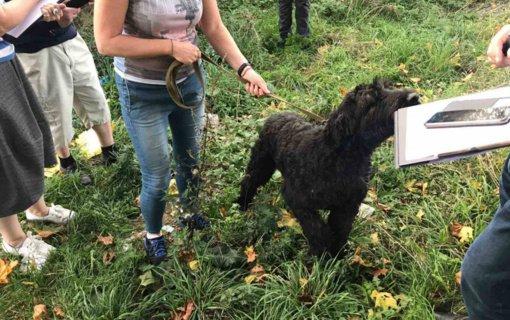 Vilniaus rajone nustatytas dar vienas žiauraus elgesio su gyvūnais atvejis