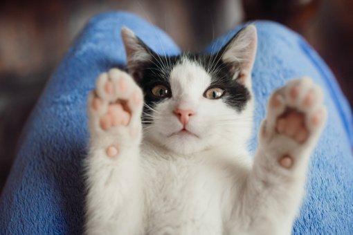 Patarimai,  kad katė namie būtų laiminga