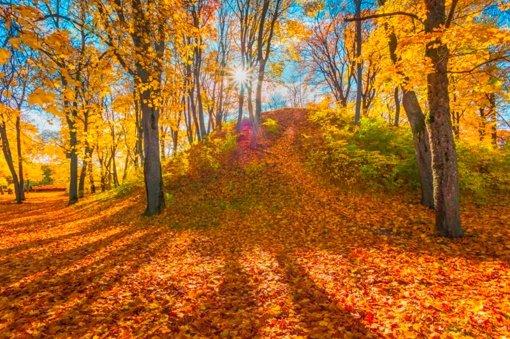 Auksinis ruduo nutiesė spalvingus maršrutus po Trakų apylinkes