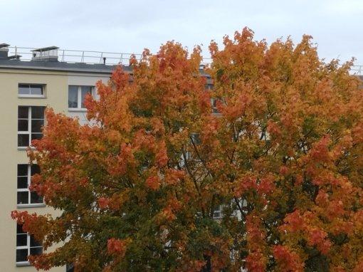 Šiaulių mieste ir dalyje rajono įstaigų pradedamas šildymo sezonas
