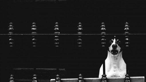 Agresyvaus šuns Kaune užpulta šeima liko sukrėsta: atbėgęs šeimininkas žemino, keikė ir sumušė