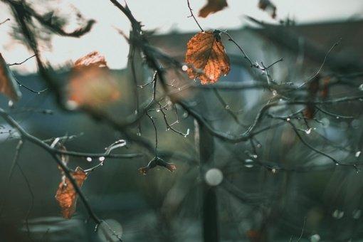Orai: į Lietuvą brausis rudeniška vėsa