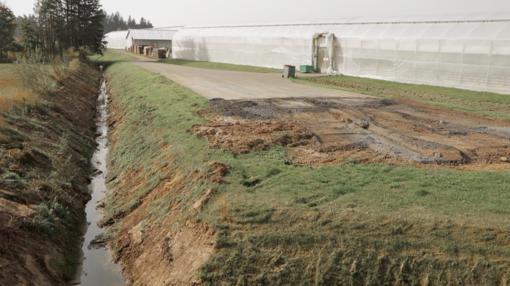 Anykščių ežeras virto dvokiančia bala – pėdsakai veda į daržovių fabriką