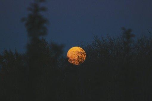 Pasaulis labiau šyla naktimis, o ne dienomis