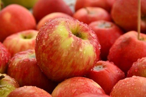 Lietuviški obuoliai pigesni nebus, nors derlius daug didesnis nei pernai