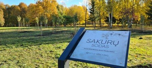 Dainų parke pasodintas sakurų sodas