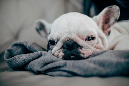 Prokuratūra nutraukė ikiteisminį tyrimą dėl Kauno rajone netinkamai laikyto 81 šuns