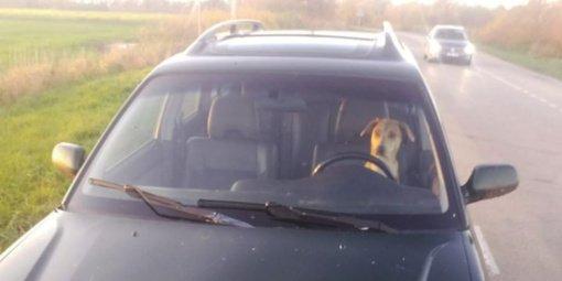 Neblaivų šeimininką gelbėti suskubo šuo: sėdo prie vairo