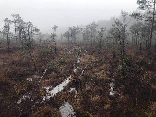 Aplinkosaugininkai pradėjo tyrimą dėl Tauragės rajone suniokotos saugomos pelkės