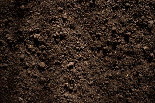 Alytaus rajone rastos dviejų žmonių kaukolės ir kaulai