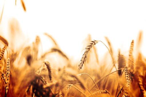 Alytaus rajono smulkieji ūkininkai prašyti paramos neskuba