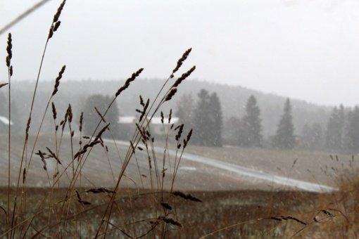 Po vėjuotų dienų – žiemiškesni pokyčiai