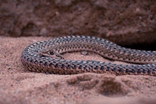 Nelaimė po nelaimės: maliarija ir COVID-19 persirgusiam britui ... įkando kobra