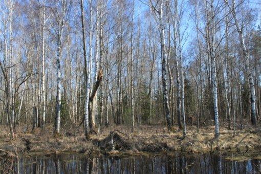 Byloje dėl durpių gavybos Dainių miške priimtas galutinis sprendimas
