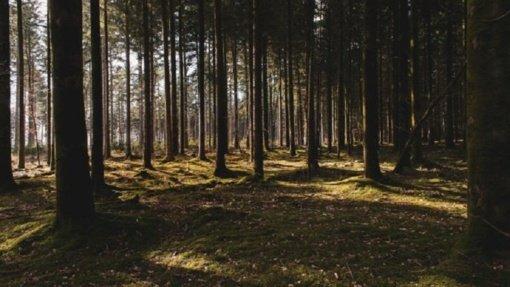 Išsakyti nuomonėms dėl Girulių miško – vos kelios dienos