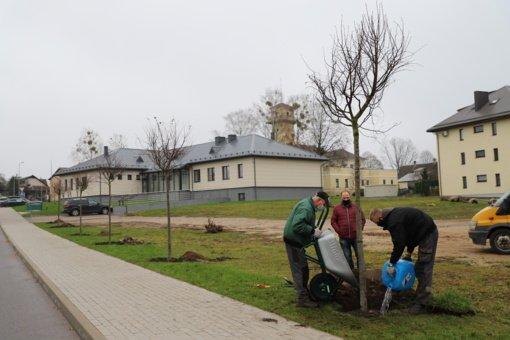 Pavasarį Druskininkuose sužaliuos daugiau kaip 300 želdinių
