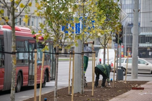 Vilniuje finišuoja rudeniniai medžių sodinimo darbai