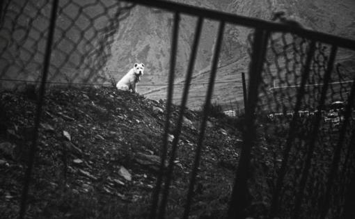 Žiaurumo proveržis Utenoje: šunį smaugė ir skandino, o nepribaigė tik neradęs tam tinkamos plytos