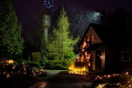 Šiaulių universiteto Botanikos sodo augalai pasipuoš šimtais lempučių ir žvakių liepsnelių