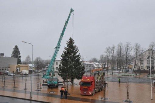 Pakruojis ruošiasi Kalėdoms: Vienybės aikštėje pastatyta kalėdinė eglė