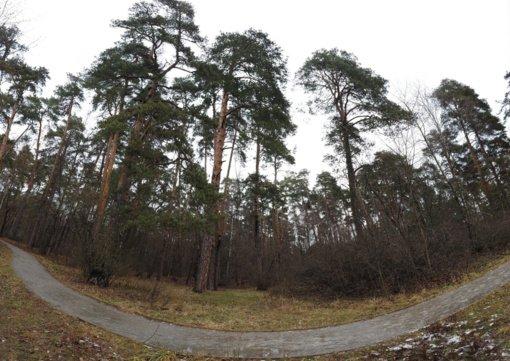 Kviečiami atsiliepti link Švendubrės esančių miškų sklypų savininkai