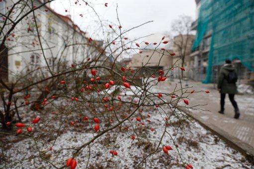 Savaitgalį pradžiugins sniegas, bet keliuose tykos pavojai