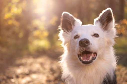 Pagėgių savivaldybėje išgelbėti du skendę šunys