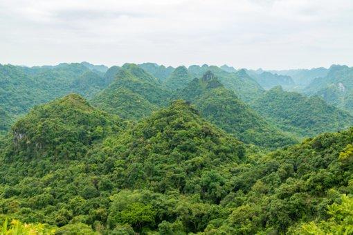 Miškų naikinimas Amazonėje pasiekė sunkiai suvokiamus mastus