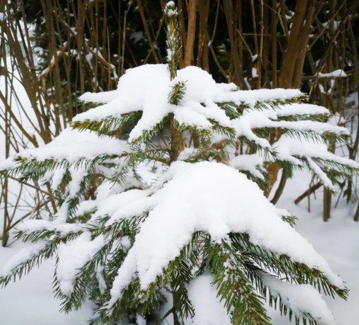 Gausiai iškritęs sniegas ir dėl jo dingusi elektra sutrikdė Varėnos rajono tarybos darbą