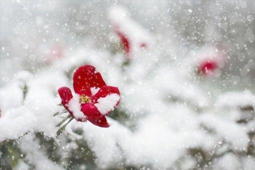 Kaip sniegas vidurvasary