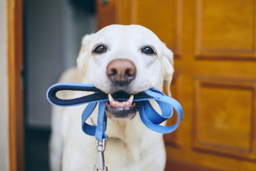 Būtiniausios gyvūnų prekės: ką įsigyti, nusprendus laikyti šunį arba katę?