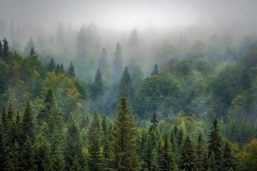 Miškininkai Trakų teritorijoje valys beveik 16 hektarų miško plotą