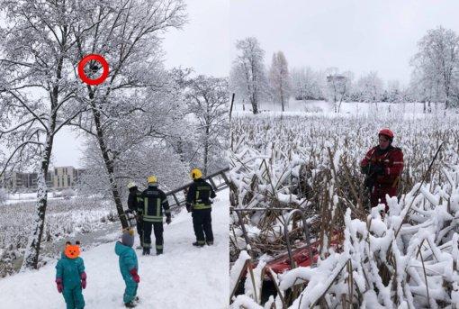 Katino gelbėjimo operacija sostinėje: iš medžio į ledinį vandenį