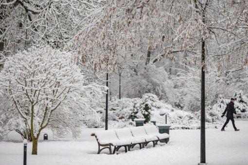 Vilniaus parkų takai žiemą prižiūrimi kitaip nei miesto šaligatviai