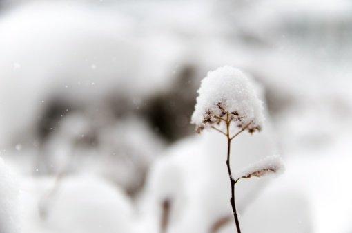 Plūstelėjusi šiluma naikins žiemišką peizažą