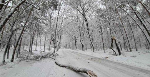 Alytaus parkuose daug nulūžusių šakų ir medžių, gyventojai raginami į juos neiti