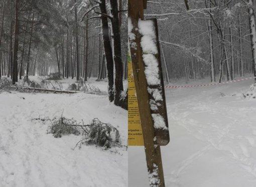 Ukmergės miškininkai įspėja – miškuose šiuo metu lankytis pavojinga