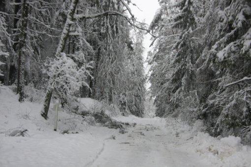 Birštono savivaldybėje nuo sniego lūžo medžiai, yra nepravažiuojamų kelių