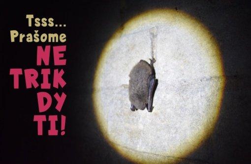 Kauno marių regioninis parkas prašo netrikdyti žiemojančių šikšnosparnių ramybės