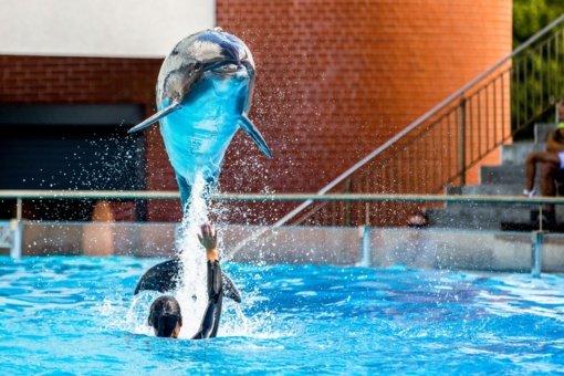 Ketvirtadieniais – delfinų pasirodymai