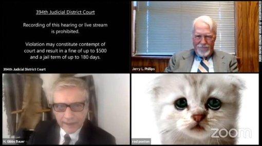 Krisite iš juoko: advokatas bylos nagrinėjime pasirodė kaip katinas (vaizdo įrašas)