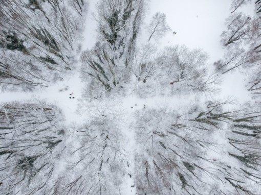 Snygis miškuose pažeidė 40 tūkstančių medžių