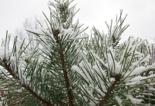 Orai: vėl padvelks žiema