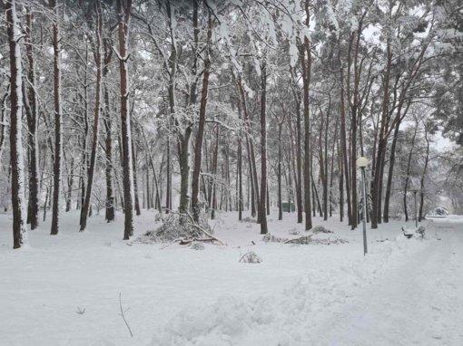 """""""Stebulė"""" nuo kitos savaitės pradeda sanitarinius kirtimus Miesto sode ir Kurorto parke"""