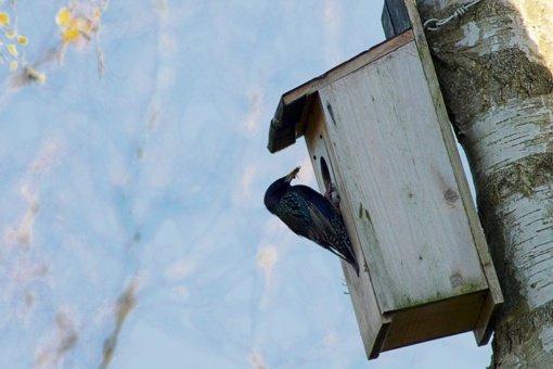 Paukščiai grįžta: miškininkai paaiškino svarbiausias inkilų kėlimo taisykles