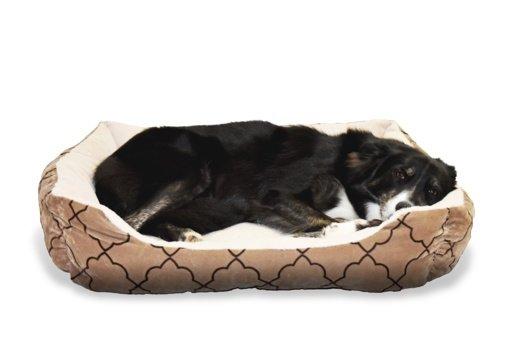 Kaip pripratinti šunį miegoti savo guolyje?
