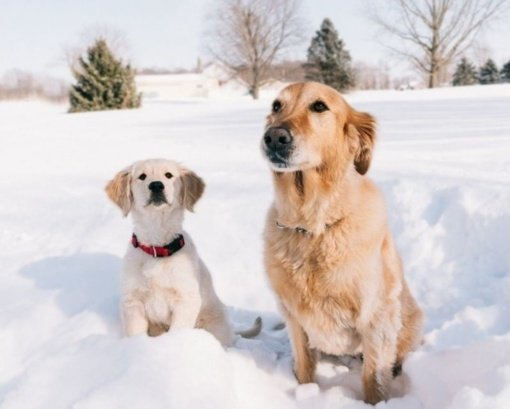 """Nutirpęs sniegas Utenoje atvėrė augintinių """"dovanėles"""""""