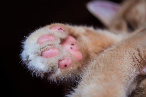 Žiauriai su katinu pasielgusiam Raseinių rajono gyventojui skirta bauda